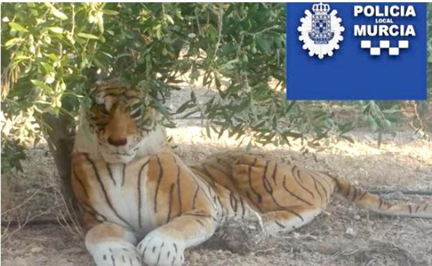 El tigre que aterrorizó a un vecino de Murcia: la historia viral